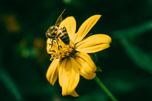 Nature, Insect, Flower, Summer, Flora, Outdoors, Garden