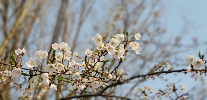 Quarter, Wood, Nature, Season, Flowers, Spring