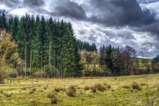 Forest, Meadow, Nature, Tree, Wood, Landscape, Panorama