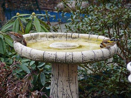 Garden, Nature, Birds, Water, Spring, Garden-bird