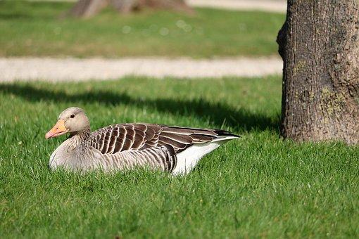 Nature, Grass, Bird, Animal World, Animal, Summer