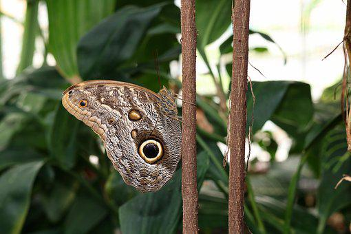 Nature, Animal World, Tropical, Leaf, Plant, Butterfly
