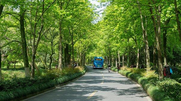 Wood, Tree, Nature, Leaf, Road, Landscape, Environment