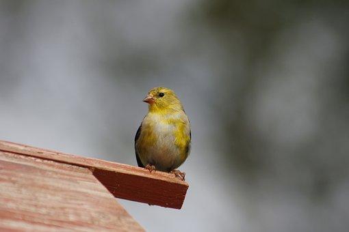 Bird, Nature, Outdoors, Little, Wildlife, Animal, Wild
