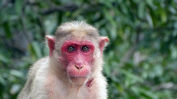 Monkey, Nature, Animal, Animal World, Wild, Makak