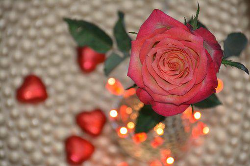 Rose, Flower, Floral, Gift, Nature, Love, Romantic
