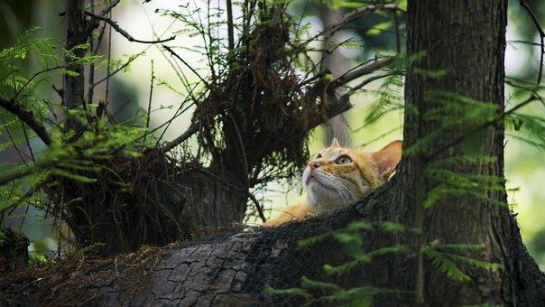 Nature, Tree, Wood, Leaf, Wildlife, Outdoor, Plant
