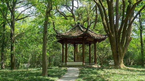 Wood, Tree, Nature, Plant, Leaf, Wooden, Pavilion, Park