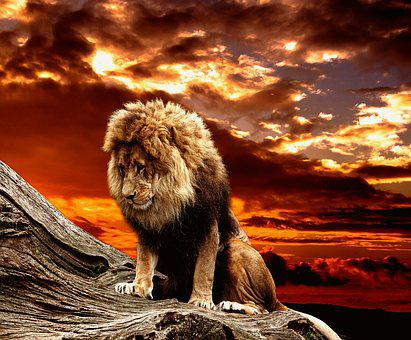 Lion, Predator, Male, Cat