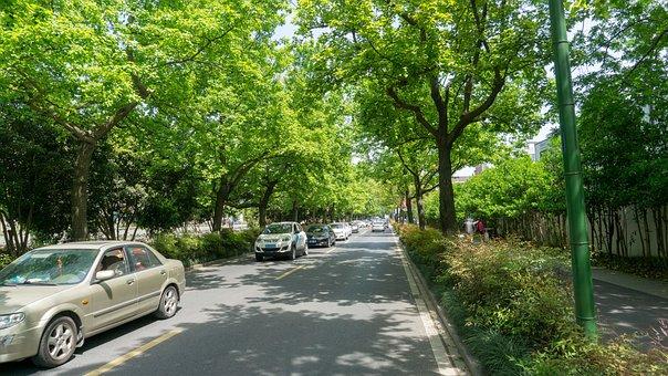 Tree, Nature, Wood, Road, Leaf, Automotive, Green Belt