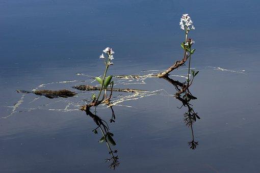Water, The Nature Of The, Bukkeblad