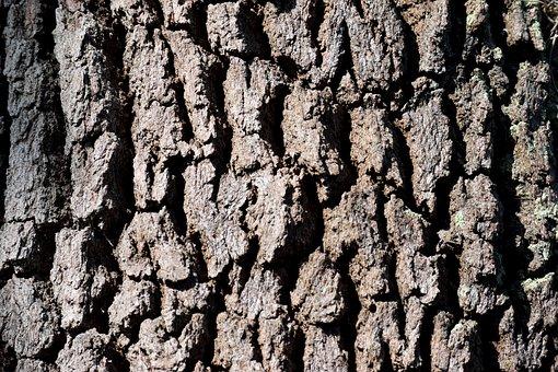 Tree Bark, Tree, Background, Backdrop, Pattern, Texture