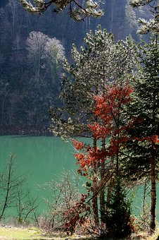 Tree, Nature, Current Season, Landscape, Lake
