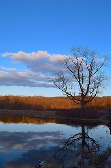 Tree, Nature, Landscape, Water, Sky, Reflection