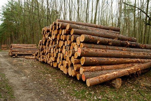Wood, Tribe, Tree, Woods, Nature, Holzstapel