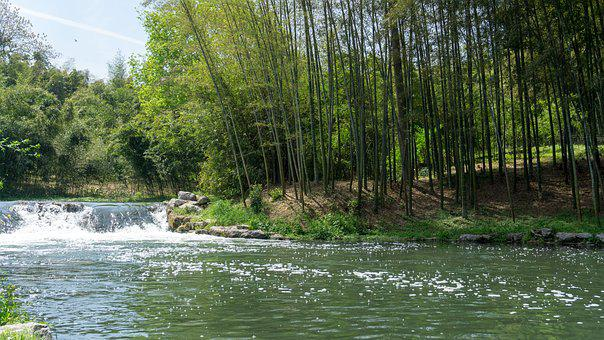 Waters, Nature, River, Tree, Wood, Bamboo, Landscape
