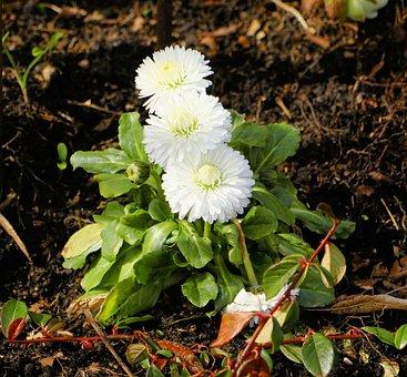 Flower, Nature, Plant, Leaf, Garden, White, Spring