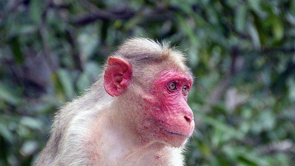 Monkey, Nature, Animal World, Animal, Wild, Makak