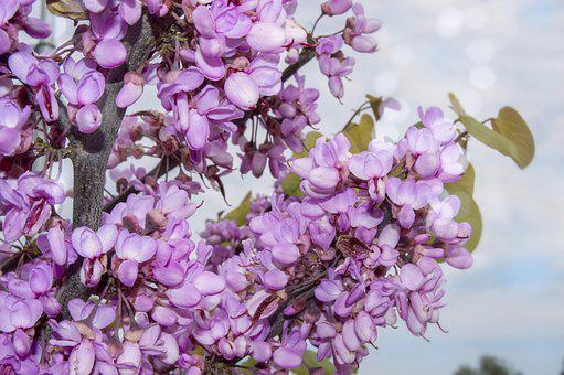 Flower, Nature, Flora, Blooming, Petal, Branch, Tree