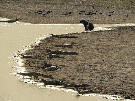 Water, Sand, Sea, Alligator, Capybara, Venezuela