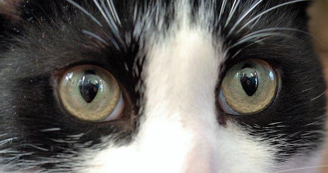 Eyeball, Eyesight, Eyelash, Staring, Eye, Cute