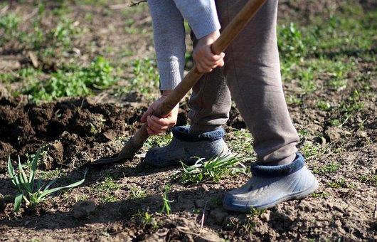 Dig, Spade, Rural, Worker