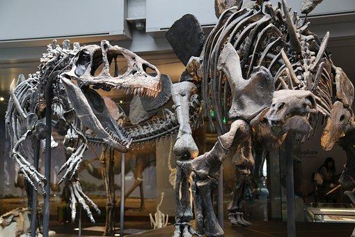 Museum, Skeleton, Dinosaur, Exhibit, Exhibition