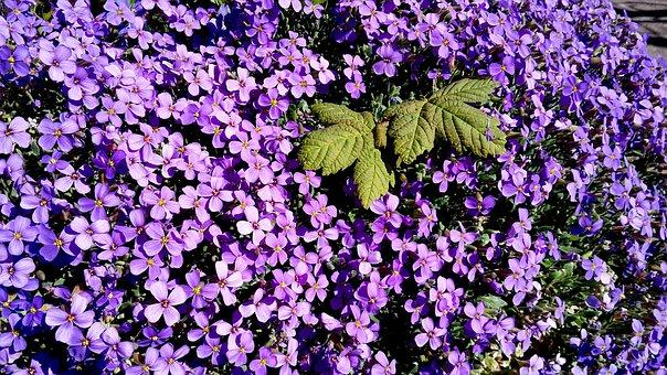 Flower, Plant, Garden, Nature, Flowers, Floral, Summer
