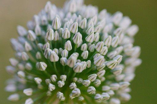 Plant, Nature, Flower, Flowers, Perennial, Petal, Leaf
