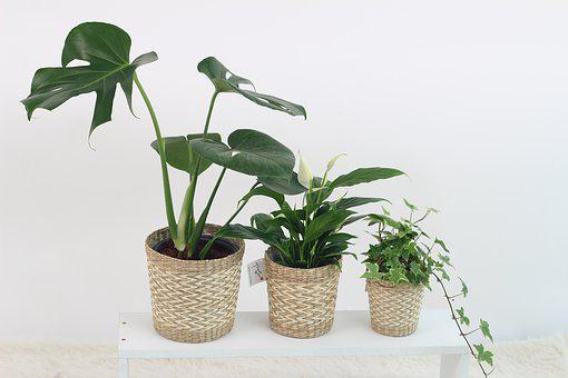 Plants, Leaf, Nature, Foliage Plants, Monster High