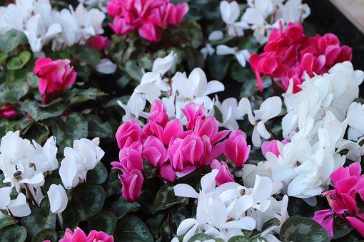 Flower, Plant, Garden, Nature, Leaf, Tulip, Petal