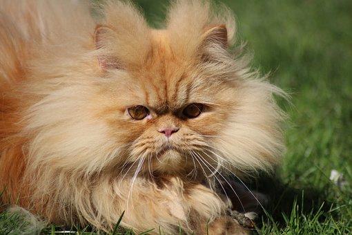 Animal, Cute, Cat, Portrait, Mammal, Fur, Young, Pet