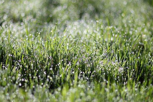 Grass, Dew, Morning, Green, Wet, Water