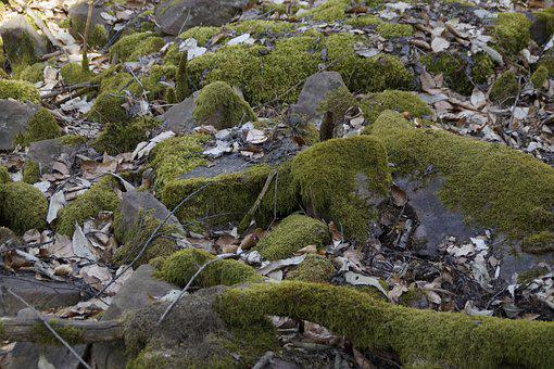 Nature, Stone, Forest Floor, Moss, Mossy, Forest, Floor