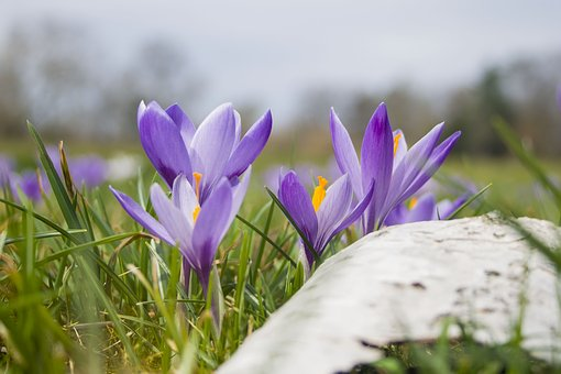 Nature, Flower, Plant, Grass, Flowers, Spring, Garden