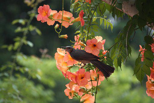 Flowers, Plants, Nature, Leaf, Garden