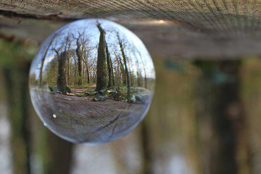 Forest, Trees, Nature, Glass Ball, Ivy, Reflection