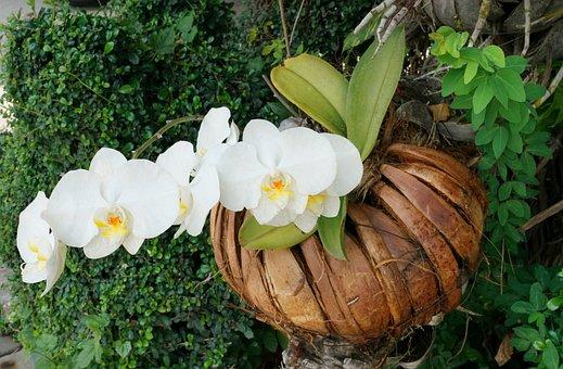 Orchid, Plant, White, Nature, Flora, Flower, Garden