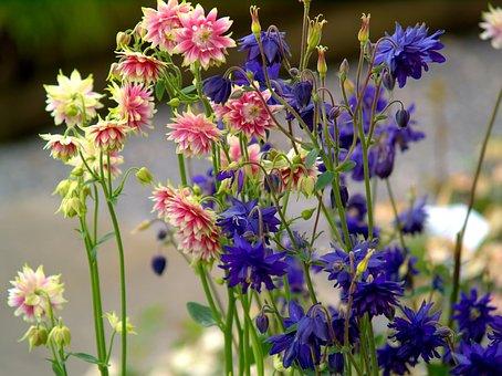 Flower, Nature, Plant, Summer, Field, Petal, Floral