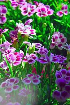 Flower, Nature, Plant, Floral, Garden, Petal, Blooming
