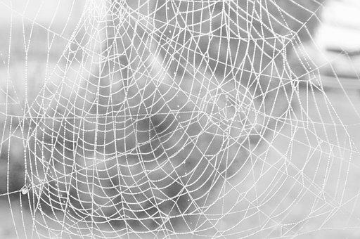 Spider, Cobweb, Case, Arachnid, Dew, Drip, Nature