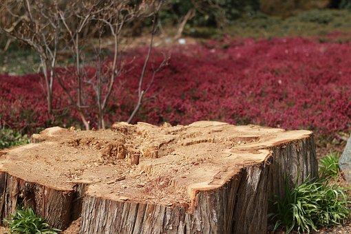 Nature, Wood, Plant, Tree, Grass, Growth, Season