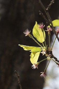 Nature, Outdoors, Wood, Plants, Flowers, Leaf, Quarter