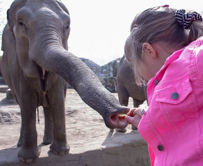 Human, Elephant, Two, Family, Child, Park, Mammal