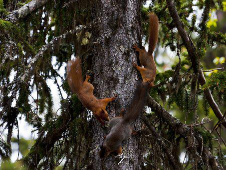 Three, The Nature Of The, Squirrel, Play