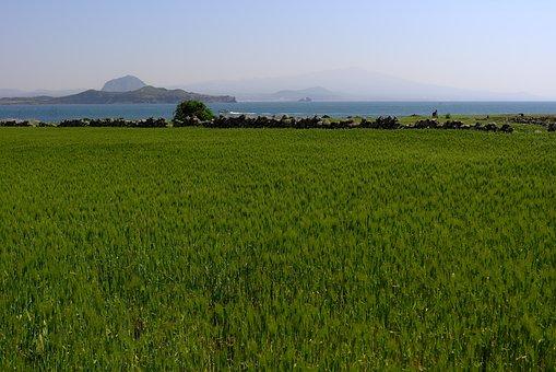 Grass, Nature, Scenery, S, Panorama Of