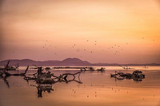 Sunset, Sea, Seagulls, Logs, Colors, Landscape