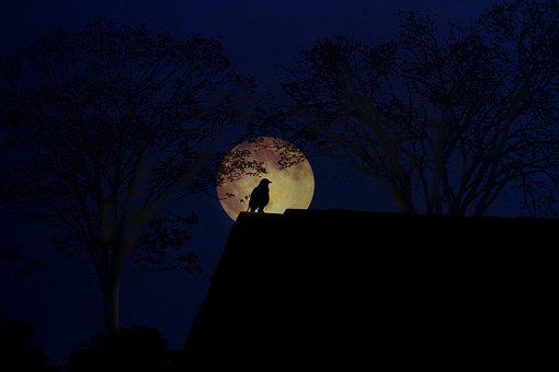 Moon, Dark, Light, Outdoors, Nature, Mystery, Sky