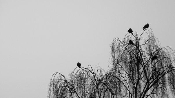 Bird, Nature, Sky, Silhouette, Tree, Death, Mourning
