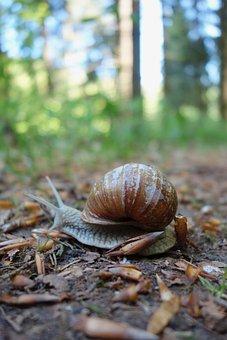 Nature, Slowly, Snail, Slimy, Bauchfuesser, Spring